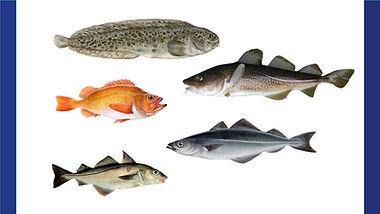 whitefish zastavka 2.jpg