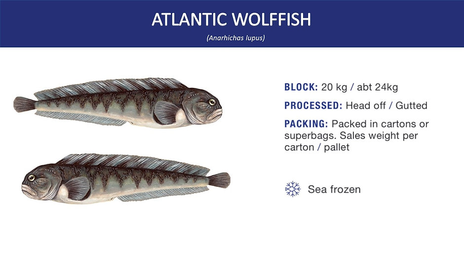 atlantic wolffish.jpg