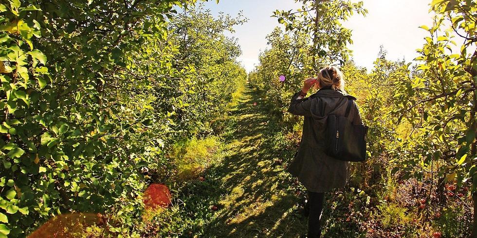 CAYP Apple Picking