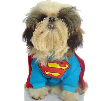 Dog Fancy Dress Clothes