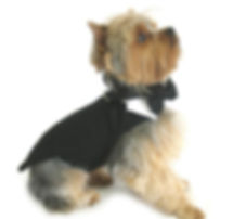 black-dog-harness-tuxedo-tails-bow-tie-c