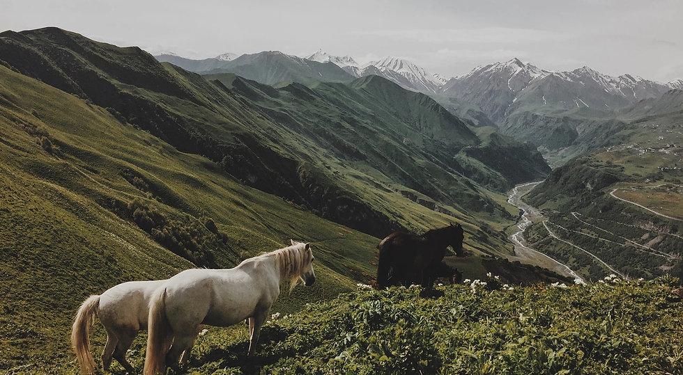 bild home bya pferde.jpg