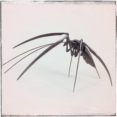 Insecte - Benalo
