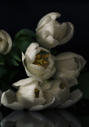 fine art tulip