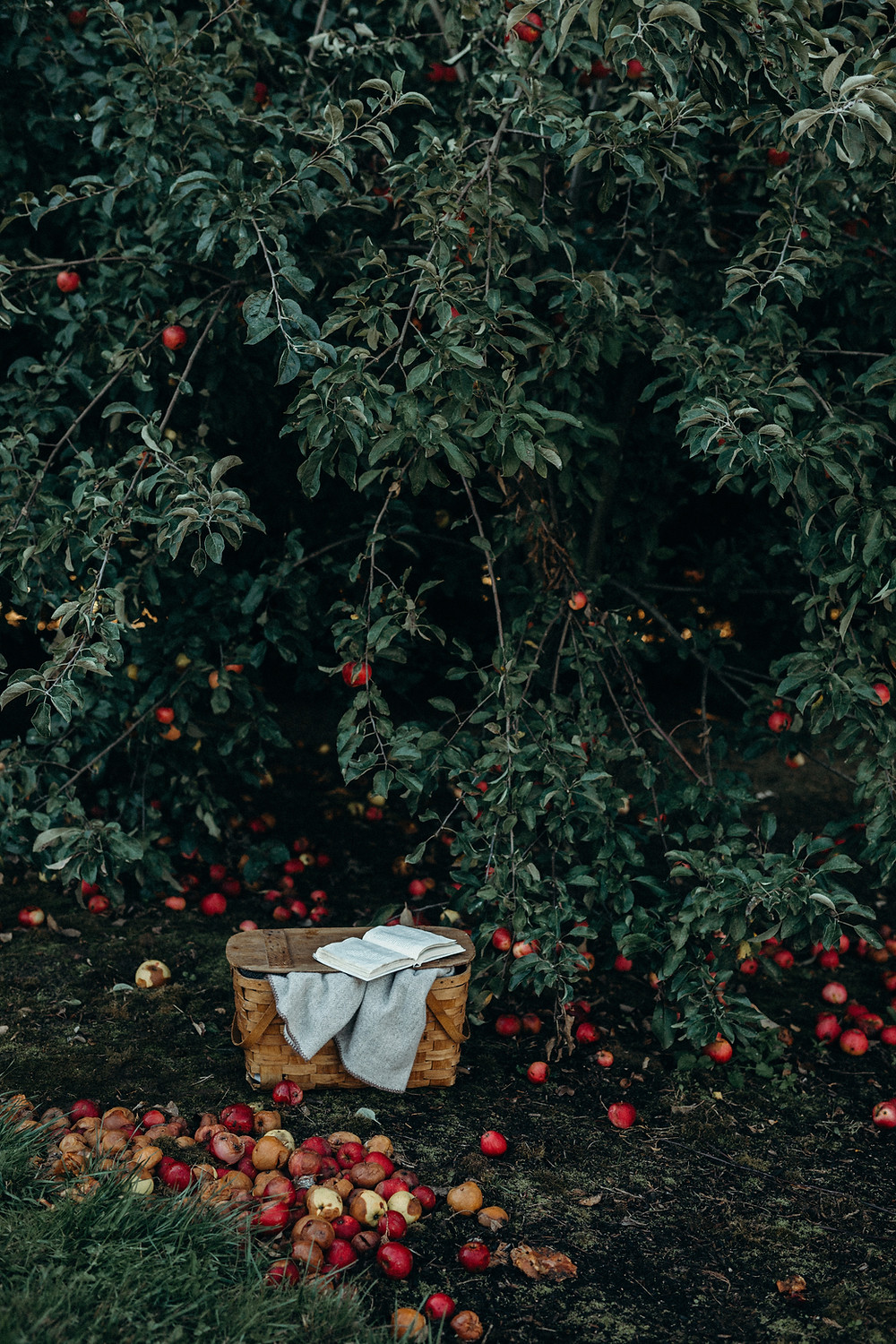 An apple tree and picnic basket