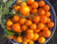 Citrus and rosemary in bowl Dec 2019.jpg