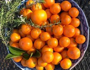 Citrus and rosemary in bowl Dec 2019.jpg