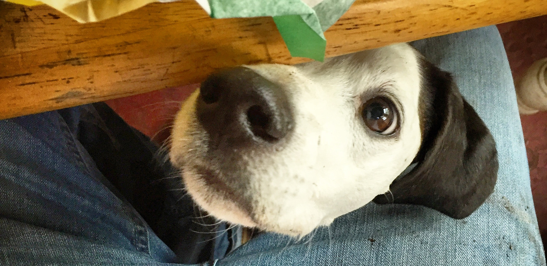 Patch is very interested if you have food
