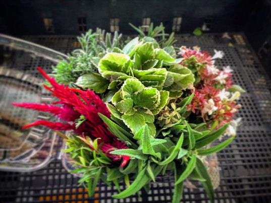 Fresh Herb and Flora Bouquet