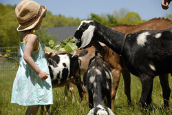 N.C. AgriTourism Networking Assoc.