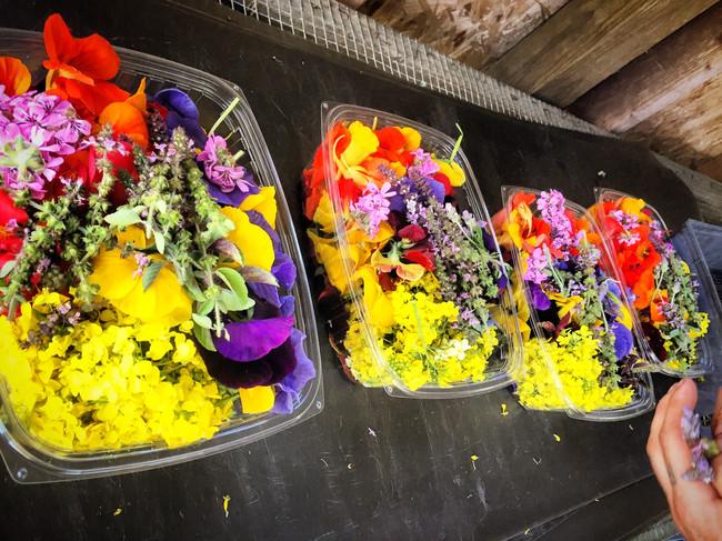 Fresh cut edible Flower Boxes