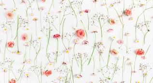 Queridas flores,