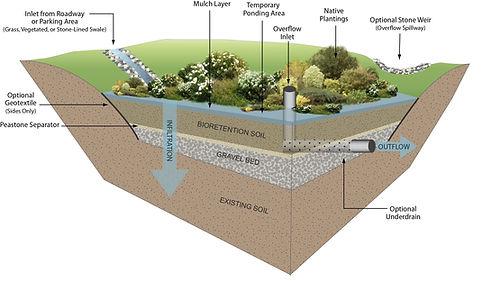 bioretentionareasandraingardens3.jpg