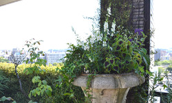 Green roof balcony
