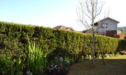 Garden with a sense of fun