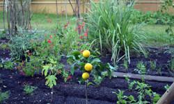 Relaxing garden for family