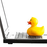 Laptop and rubber yellow duck toy isolat
