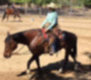 Cowboy Dressage, ridng lessons