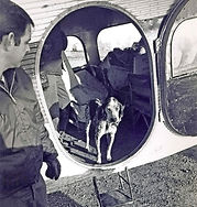 dog_flew-for-50-cents_edited.jpg