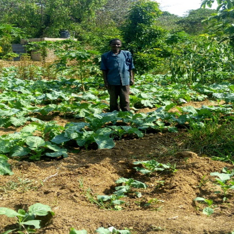 Farm Attendant Phillip in Kale Farm & Paw Paw Trees