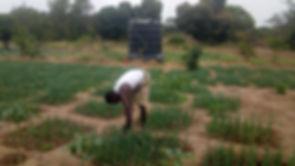 2019- JunePhilipp weeding the onions.jpg
