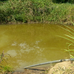 Waterpond with growing & breeding fishes
