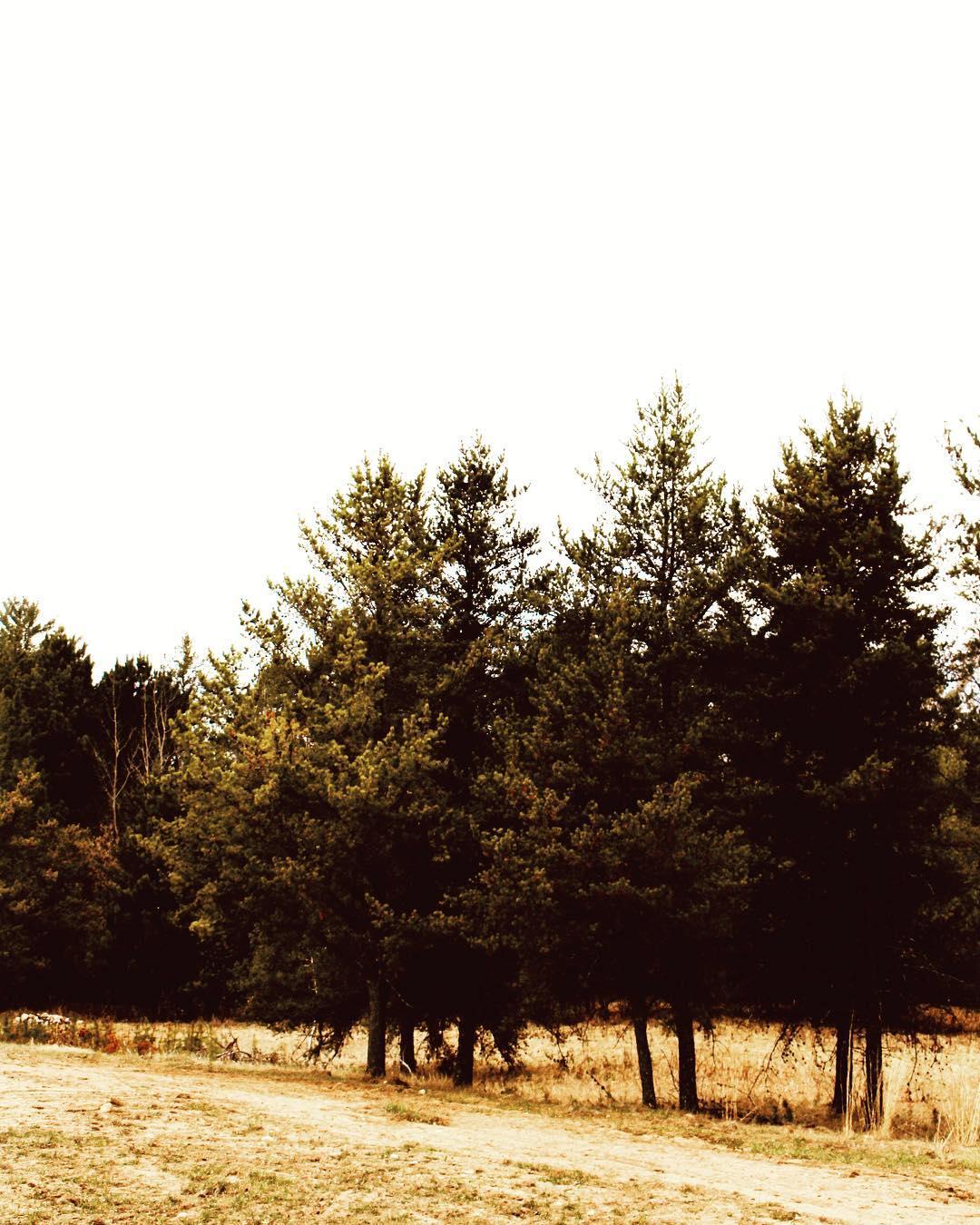 Natural Wood Enviroment
