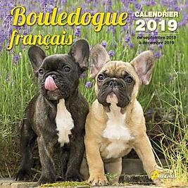 Calendrier-2019-Bouledogue-francais.jpg