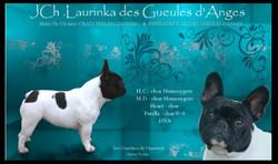 Multi J.Ch Laurinka