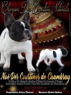 chiens-Bouledogue-fran-92516abf-14dd-381