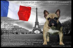 Multi JCh Louis d'Or