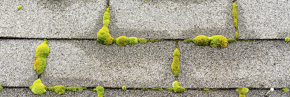 Shingles Covered with Moss