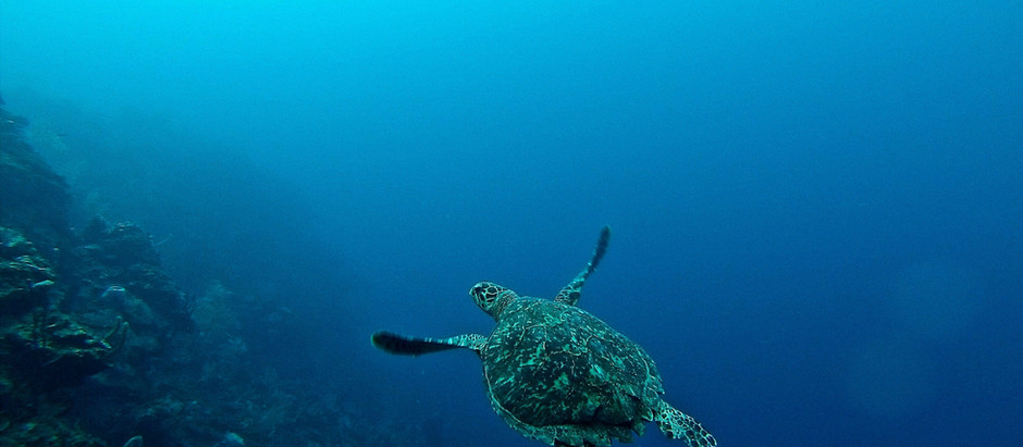 Underwater anthropogenic noise threatens the life in our seas – what to do about it?