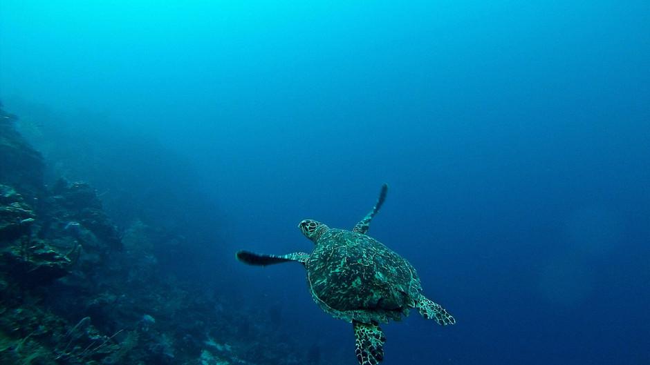 Podvodna antropogena buka prijeti životu u moru - što učiniti?