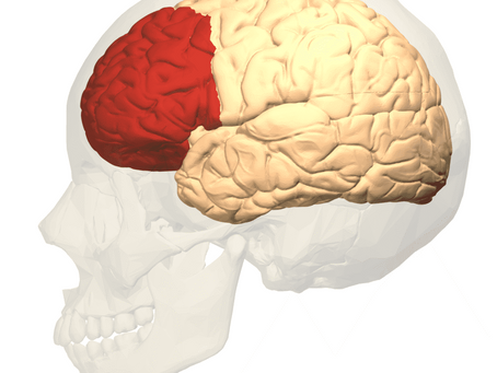 The CEO of the Brain - Meet the Prefrontal Cortex