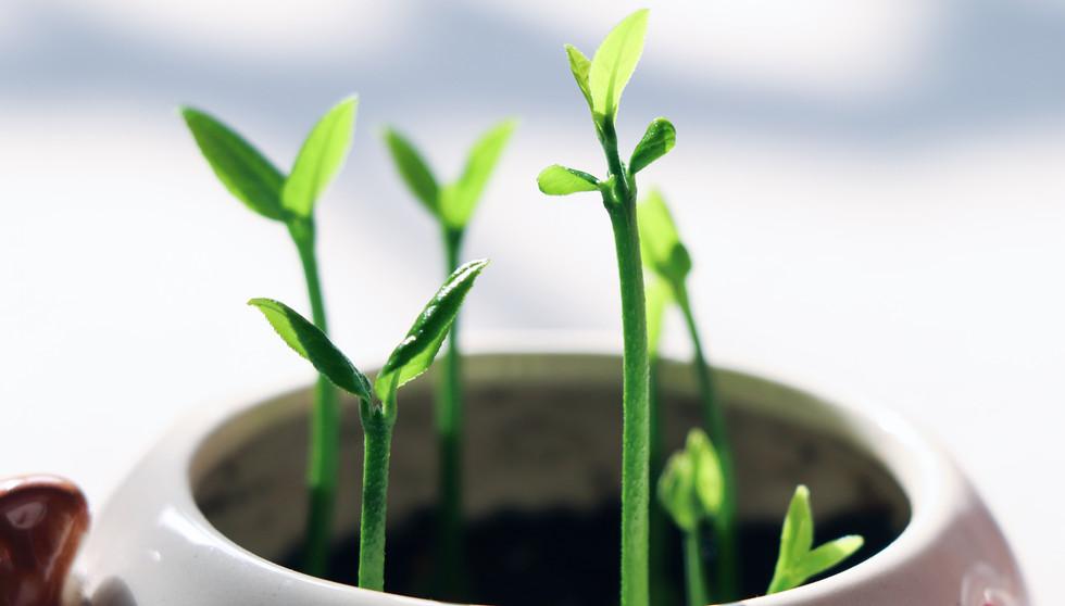 germination-4620166.jpg