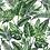 Thumbnail: 'Botanical Bella' Mask