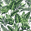 Thumbnail: 'Botanical Bella' Bow Tie