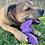 Thumbnail: SodaPup Butterfly Nylon Chew & Enrichment Toy