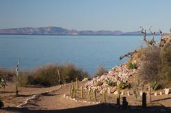 Rancho Cactimar Basse Californie desert eco ranch