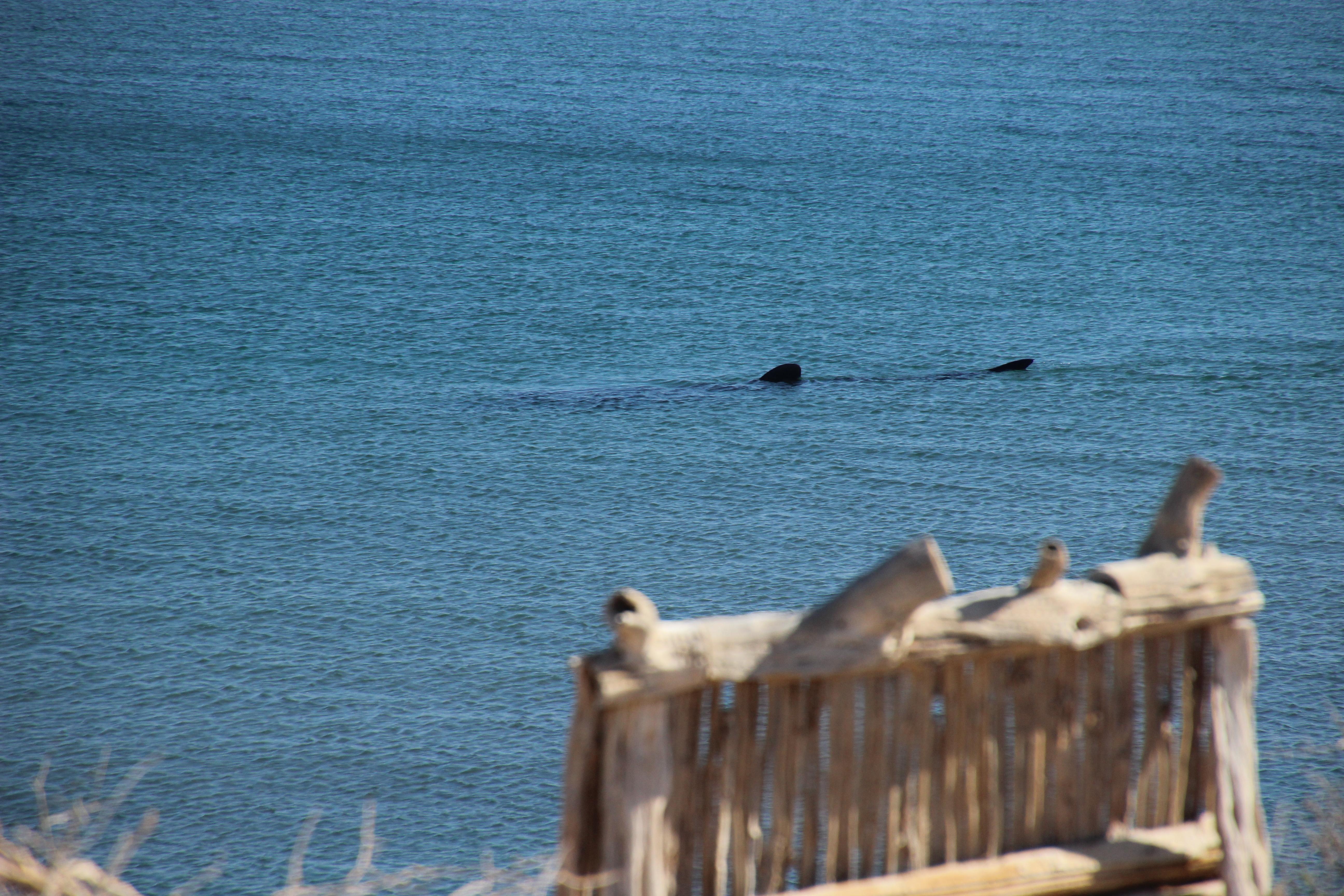 whaleshark requin baleine Cactimar