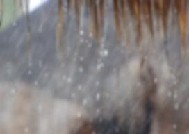 Rancho Cactimar rain desert