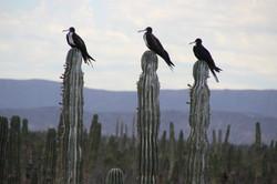 Fregates Rancho cactimar eco ranch