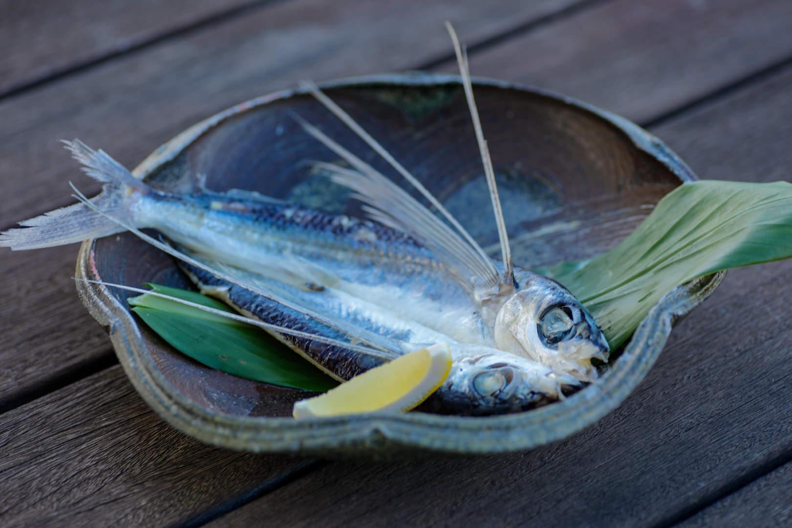 トビウオ漁獲量日本一