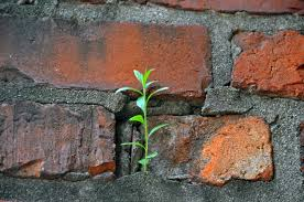 plant in bricks