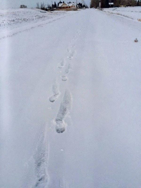 Fresh Tracks on a January Morning