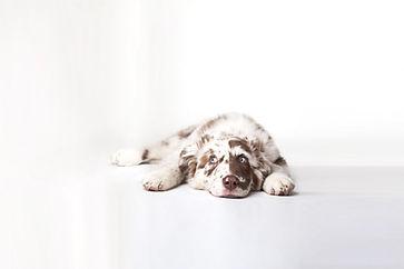 puppy-pic-blue-eyes2.jpg