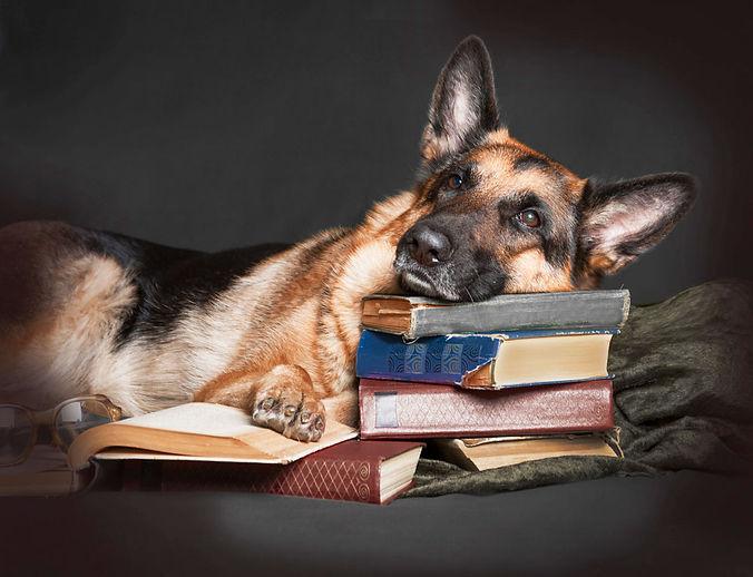 German-Shepherd-on-Books-sm.jpg
