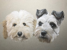 A Poodle and a Schnauzer
