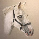 Grey Horse by Andrew Prescott
